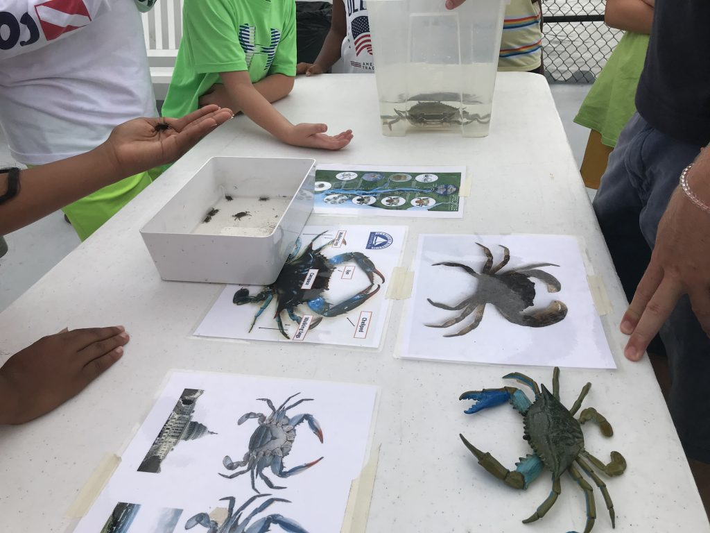 children learning about crabs
