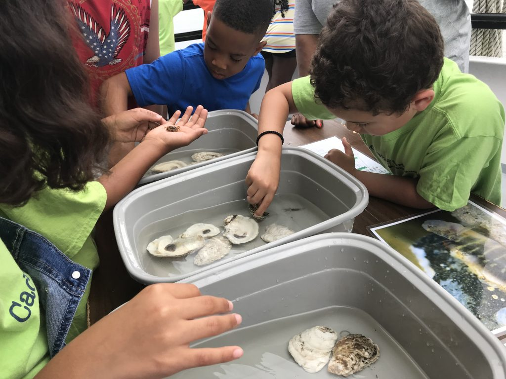 children learning about oysters